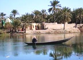 研修員の担当地域( イラク・アルマハール湿地帯):アシが多数生えており、それらを編んだ伝統的な建物などがある