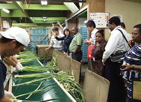 九条ねぎの生産・加工・販売を行っている農業生産法人こと京都(株) にて、ねぎの洗浄過程を見学