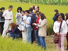 【農園 杉・五兵衛】農業の6次産業化の取り組み