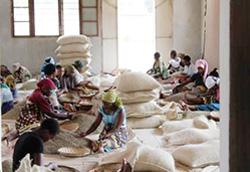 タンザニアの生産地の様子